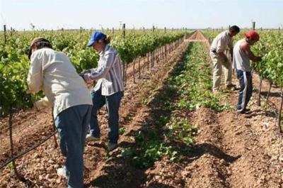 El BOE publica la esperada Orden que rebaja los módulos agrarios del IRPF de 2015