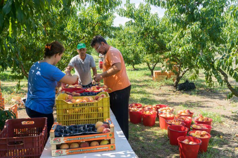 Jornadas Informativas sobre Trabajos Agrícolas en Cieza